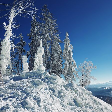 Winter snow covered fir trees on mountainside on blue sky with sun shine background. Dramatic winter scene Stock Photo