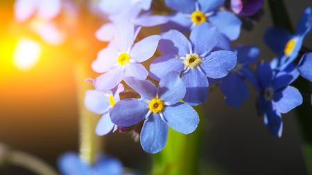푸른 녹색 배경에 꽃을 잊지 마라.