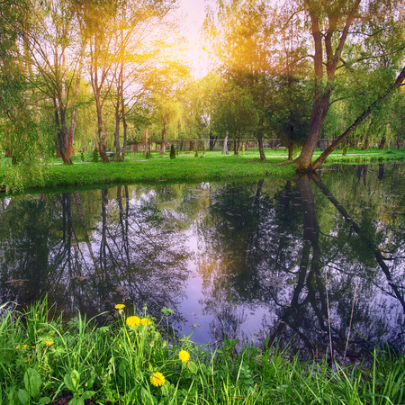 Tranquil Pond With Lush Green Woodland Park in Sunshine. Reflection of trees in water Stock Photo