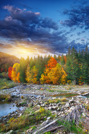 Autumn creek woods with colorfull trees foliage and rocks in forest mountain. River cascade. Dramatic sky