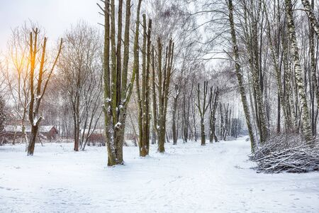 Alley of originally formed trees. Winter time in city park Stok Fotoğraf