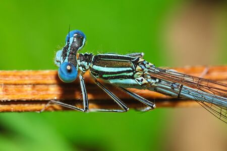 Dragonfly on a plant. Extreme close up
