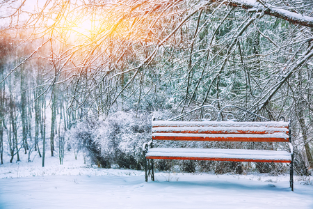 Park bench and trees covered by heavy snow. Lots of snow. Sunset time Stock Photo