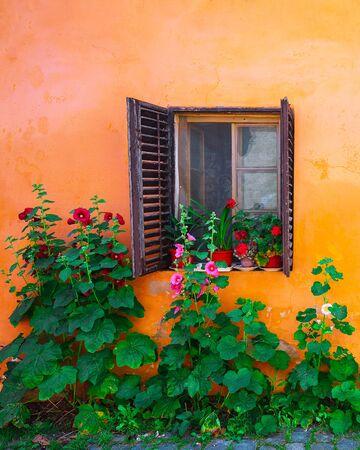 Orange facade with windows and flowers from Sighisoara city old center. Sighisoara, Transylvania, Romania, Europe