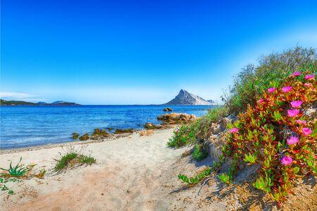 Fantastic azure water with rocks and flowers near beach Porto Taverna. Location: Loiri Porto San Paolo, Olbia Tempio province, Sardinia, Italy, Europe