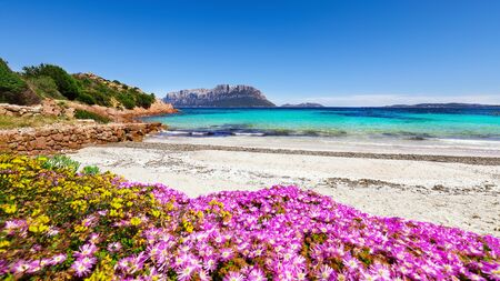 Fantastic azure water with rocks and lots of flowers at Doctors beach (Spiaggia del Dottore) near Porto Istana.  Location: Porto Istana, Olbia Tempio province, Sardinia, Italy, Europe