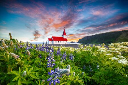 Fantastic sunset view of Vikurkirkja christian church in blooming lupine flowers. Scenic image of most popular tourist destination.Location: Vik village in Myrdal Valley, Iceland, Europe. Imagens
