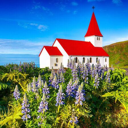 Splendid view of Vikurkirkja christian church in blooming lupine flowers. Scenic image of most popular tourist destination. Location: Vik village in Myrdal Valley, Iceland, Europe.