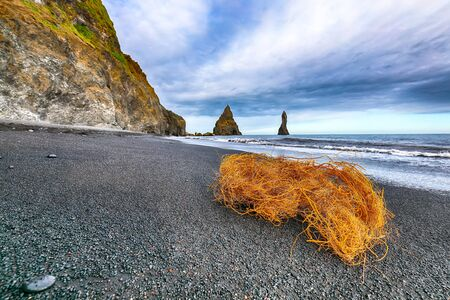 Amazing landscape with basalt rock formations Troll Toes on Black beach Reynisfjara near the village of Vik. Location: Reynisfjara Beach, Vik Village, Iceland (Sudurland), Europe