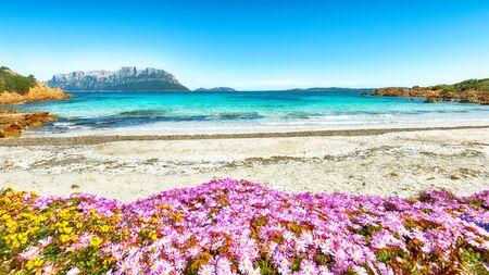 Fantastic azure water with rocks and lots of flowers at Doctors beach (Spiaggia del Dottore) near Porto Istana. Location: Porto Istana, Olbia Tempio province, Sardinia, Italy, Europe