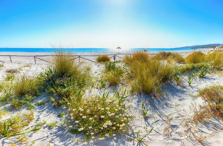 Landscape of grass and flowers in sand dunes on the beach La Cinta. Turquoise water and white sand. Location: San Teodoro, Olbia Tempio province, Sardinia, Italy, Europe