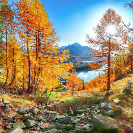 Fantastic autumn panorama over Sils im Engadin (Segl) village and Sils lake(Silsersee). Location: Sils im Engadin, Maloya district, Engadine region, Grisons canton, Switzerland, Europe.