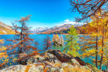 Picturesque autumn views of Sils Lake (Silsersee) with small islands. Colorful autumn scene of Swiss Alps. Location: Maloya, Engadine region, Grisons canton, Switzerland, Europe. 免版税图像