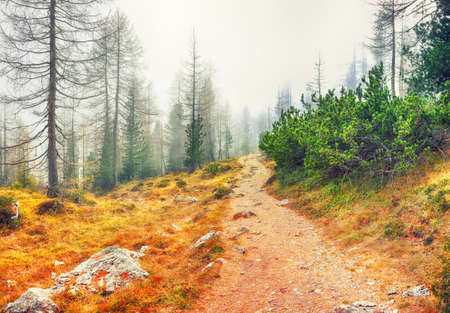 Autumn foggy landscape with pinetrees and larches in mountains on the track to Federa lake. Location: Cortina d'Ampezzo, Province of Belluno, South Tyrol, Italy, Europe Banco de Imagens