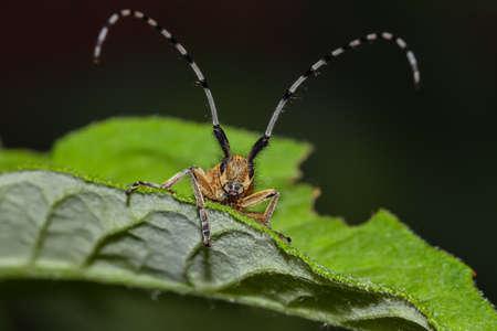 Beetle on green leaf. Extreme close up 免版税图像