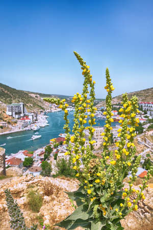 Stunning view of Balaklava bay with yachts from the Genoese fortress Chembalo in Sevastopol city. Blooming mallow at foreground. Crimea