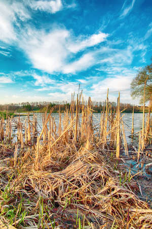Sunny day on a calm river during early spring. Dramatic blue sky. Dry reeds on the front 免版税图像