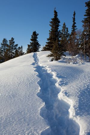 snowshoe: Winter landscape with snowshoe tracks in deep snow.