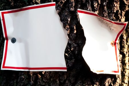 Sign torn apart by growing tree trunk.  Empty copyspace for your message. photo
