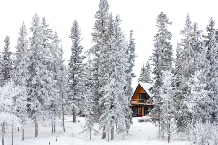 White Christmas in winter cabin in the woods between snow covered spruce trees.