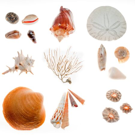 Found on beach walk: a great variety of shells, sand dollar, croral skeleton photo