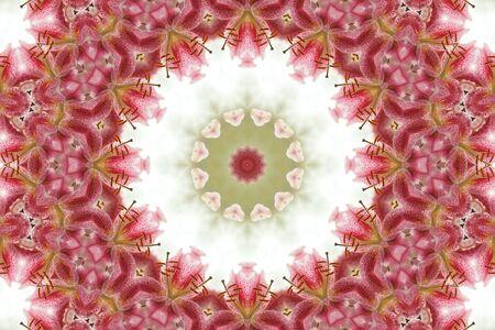 Kaleidoscopic altered image of Stargazer Lily resembling a mandala photo