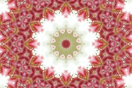 mandala: Kaleidoscopic altered image of Stargazer Lily resembling a mandala