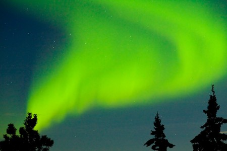 Intense Aurora borealis dancing over spruce tops in moon lit night sky.