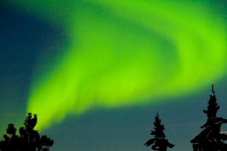 ionosphere: Intense Aurora borealis dancing over spruce tops in moon lit night sky.
