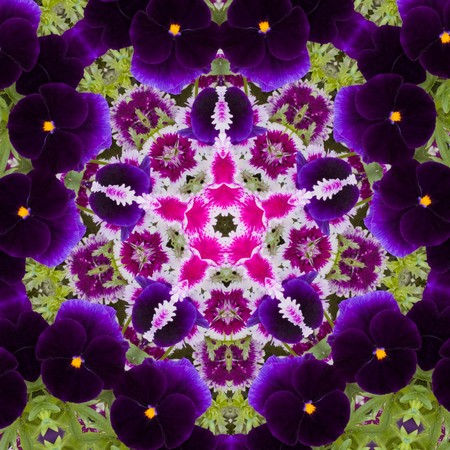 Kaleidoscopic altered image of garden flowers (pansies, dianthus) resembling a mandala