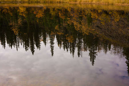 Fall-colored boreal forest (taiga) of Yukon Territory, Canada, reflected on calm surface of pond. photo