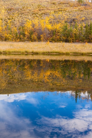 Fall-colored boreal forest (taiga) of Yukon Territory, Canada, reflected on calm surface of pond.