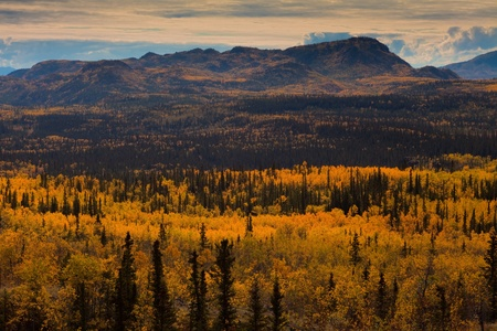 boreal: Fall-colored boreal forest (taiga) in Yukon Territory, Canada Stock Photo