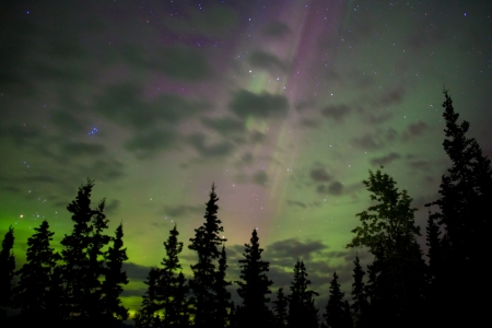 Night sky with lots of stars, northern lights (Aurora borealis) and some clouds above tree tops.