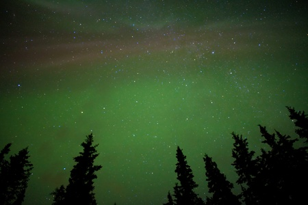 Night sky with lots of stars and northern lights (Aurora borealis) above tree tops.