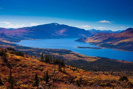 boreal: Fall-colored boreal forest at shores of Fish Lake, Yukon Territory, Canada.