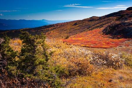 alpine tundra: Fall-colored alpine tundra, Yukon Territory, Canada. Stock Photo