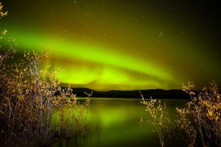 오로라: Intense northern lights (Aurora borealis) over Lake Laberge, Yukon Territory, Canada, with fall colored willows on lake shore.