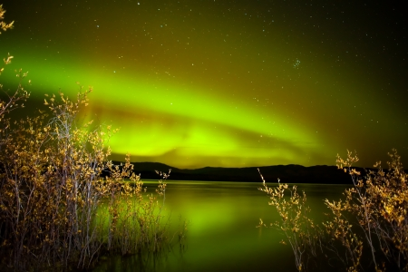 the aurora: Intense northern lights (Aurora borealis) over Lake Laberge, Yukon Territory, Canada, with fall colored willows on lake shore.
