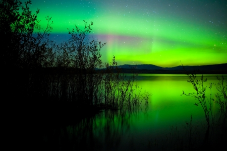 오로라: Intense northern lights (Aurora borealis) over Lake Laberge, Yukon Territory, Canada, with silhouettes of willows on lake shore.