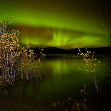 Intense northern lights (Aurora borealis) over Lake Laberge, Yukon Territory, Canada, with fall colored willows on lake shore.