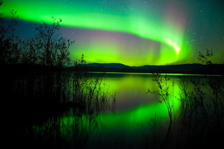 the aurora: Intense northern lights (Aurora borealis) over Lake Laberge, Yukon Territory, Canada, with silhouettes of willows on lake shore.