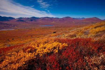 Fall-colored alpine tundra, Yukon Territory, Canada.