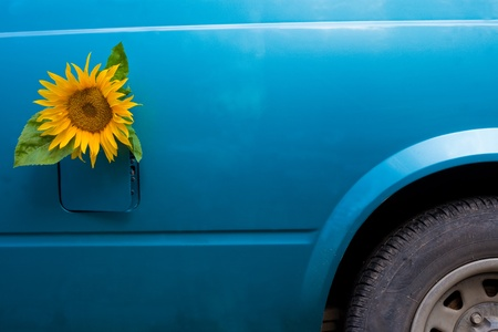 Sunflower growing out of a vehicle's gas tank symbolizing the concept of bio-fuel.
