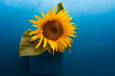 Sunflower growing out of a vehicles gas tank symbolizing the concept of bio-fuel. photo