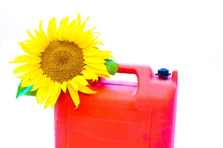 Jerry-can with blooming sunflower over white background symbolizing the concept of bio-fuel.