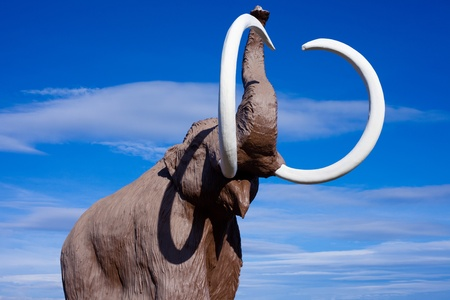 wooly: Sculpture of extinct wooly mammoth in aggressive pose. Stock Photo