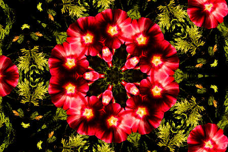 mandala: Kaleidoscopic altered image of Hibiscus flower resembling a mandala