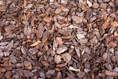 Pine bark mulch background texture pattern in outdoor garden.