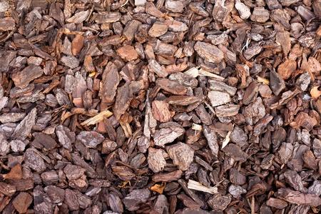 bark mulch: Pine bark mulch background texture pattern in outdoor garden.